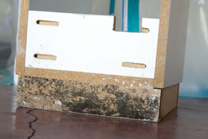 warning signs of mold
